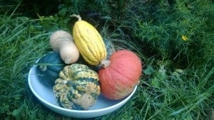 A variety of fall squash outside in a bowl