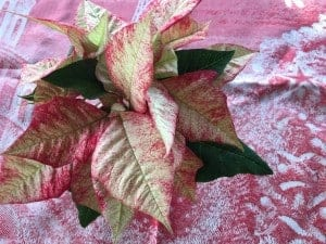 This pointsettia is so beautiful.