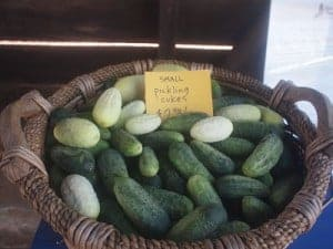 Lemon pickles are a variety of cucumber
