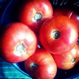 Fresh local tomatoes, the main ingredient for salsa