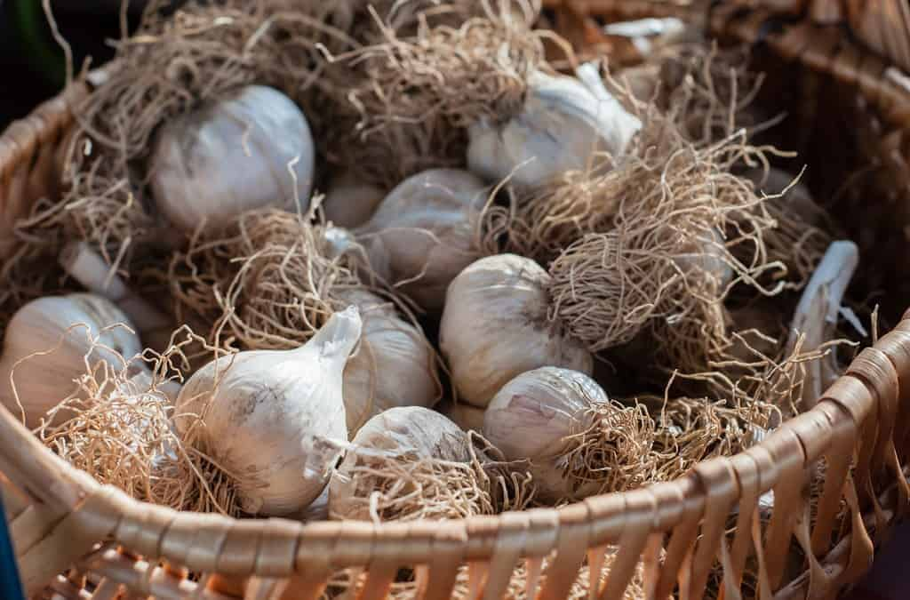 Nutritional Benefits of Garlic and My Favorite Ways to Prepare Garlic