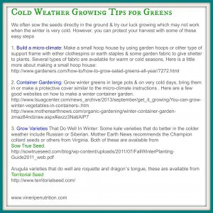 Here are a few tips for growing greens in cold weather