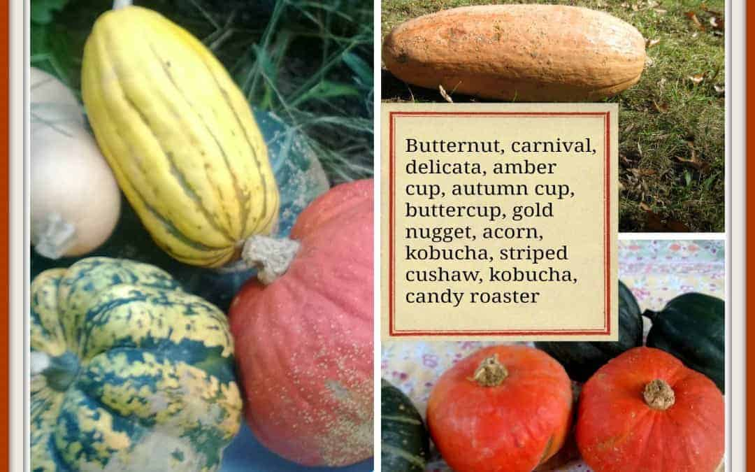 know your squash poster with a variety of squash