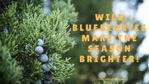 Wild Blueberries Make the season brighter